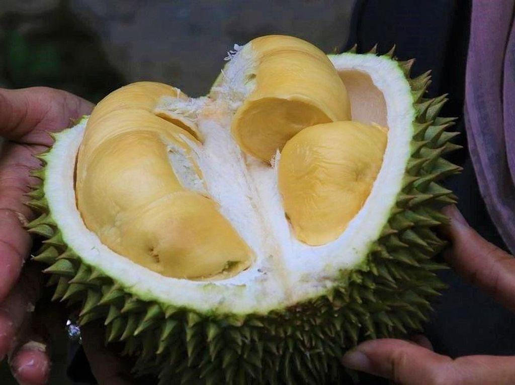 Deretan Buah Bentuk Unik hingga Cara Pilih Durian Masak