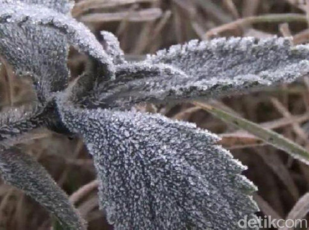 Lagi, Fenomena Salju Kembali Turun di Kawasan Bromo