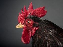 Penasaran Sunat Model Jengger Ayam dan Bentuk Bunga? Ternyata Ini Maksudnya