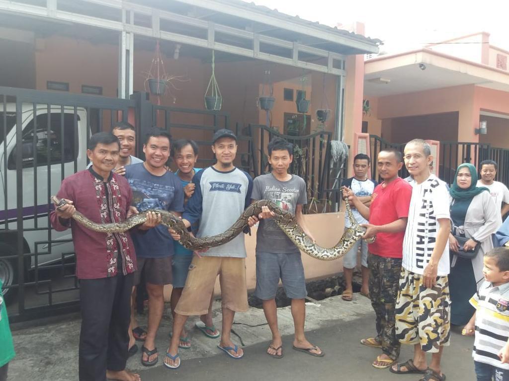 Warga Tangkap Ular 4 Meter di Perumahan Bekasi Saat Kerja Bakti