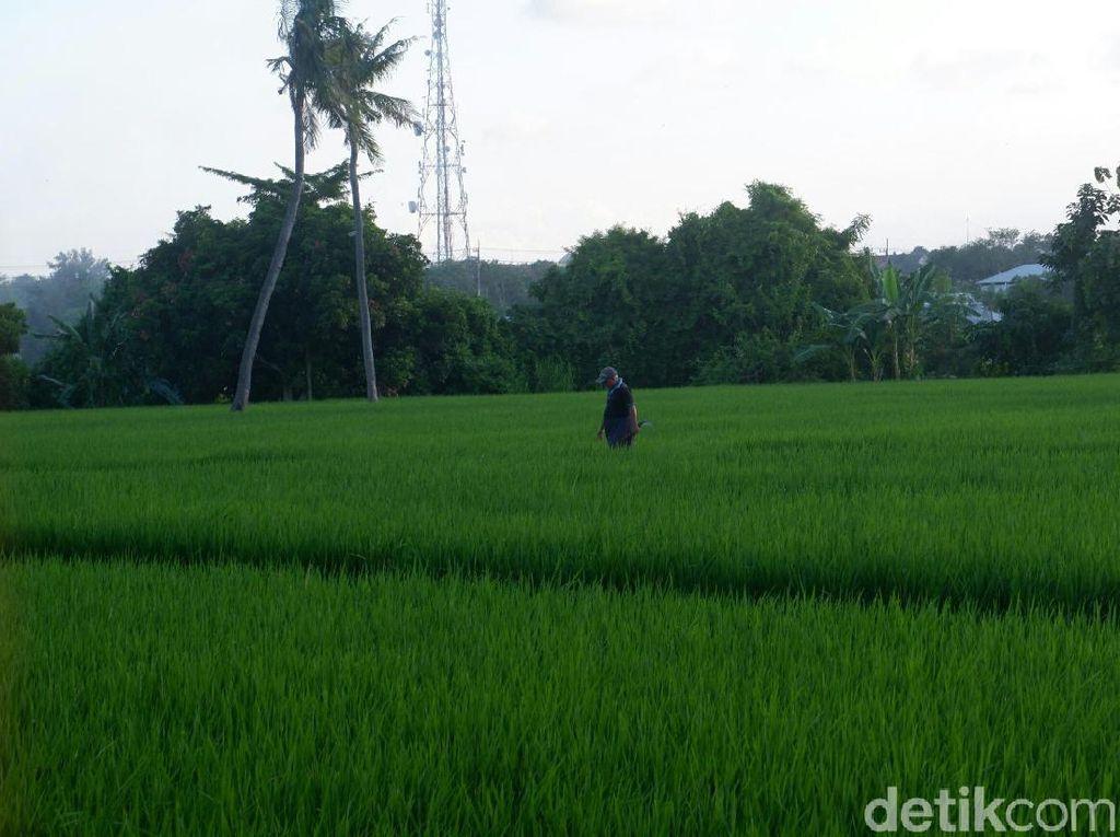 Double Track Pertanian di Tengah Badai Resesi