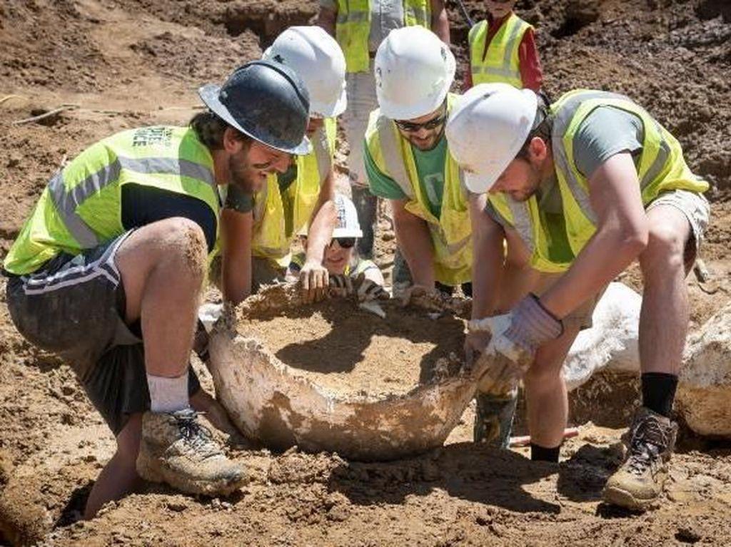 Fosil Dinosaurus Berusia 68 Juta Tahun Ditemukan di Panti Jompo AS