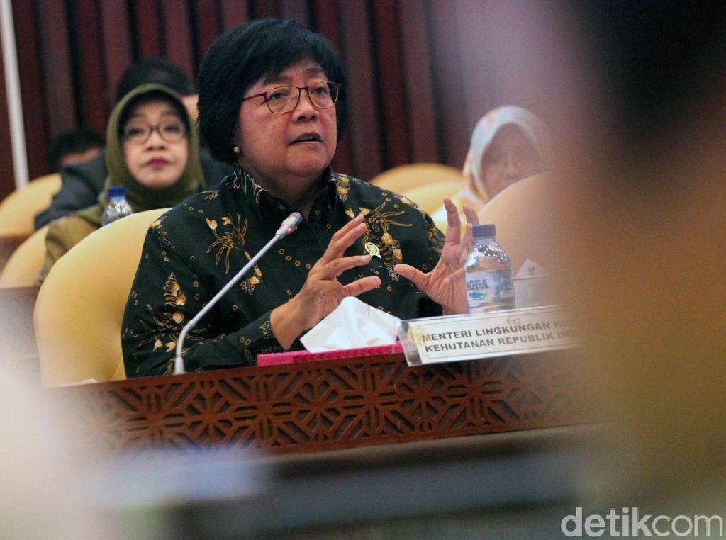Menteri LHK Kejar Pelaku yang Kuliti Macan Dahan