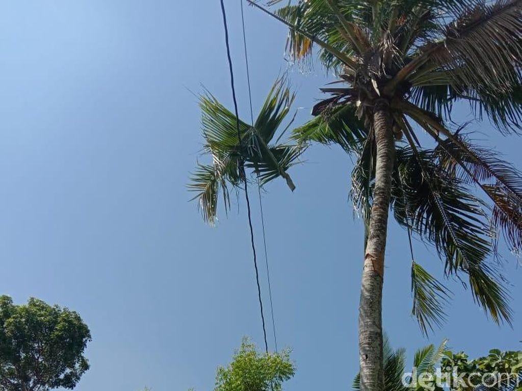 Warga Rembang Tewas Gosong Akibat Kesetrum Saat Memanjat Pohon