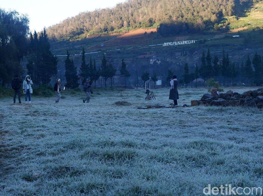 Akibat Fenomena Embun Es, 5 Hektare Tanaman Kentang di Dieng Mati