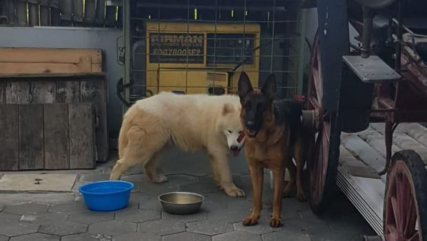 Derita Bocah di Sleman Dikeroyok 2 Anjing Piaran Keluarga Artis