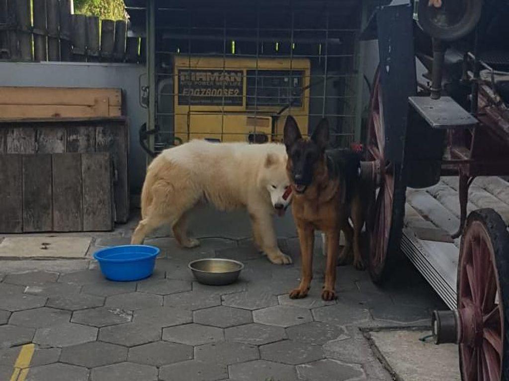 Agar Luka Tak Parah, Begini Respons Hadapi Anjing yang Menggigit