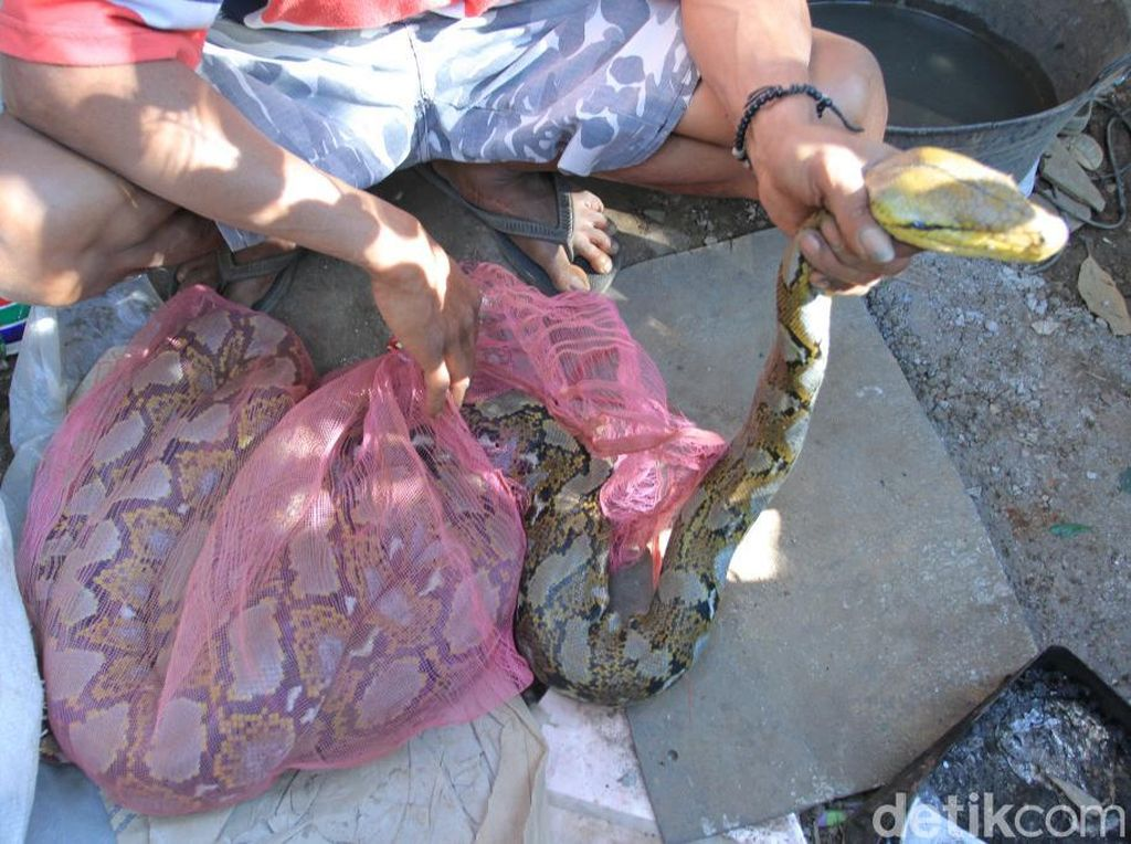 Warga Tangkap 2 Ular Piton di Aliran Sungai Citarum