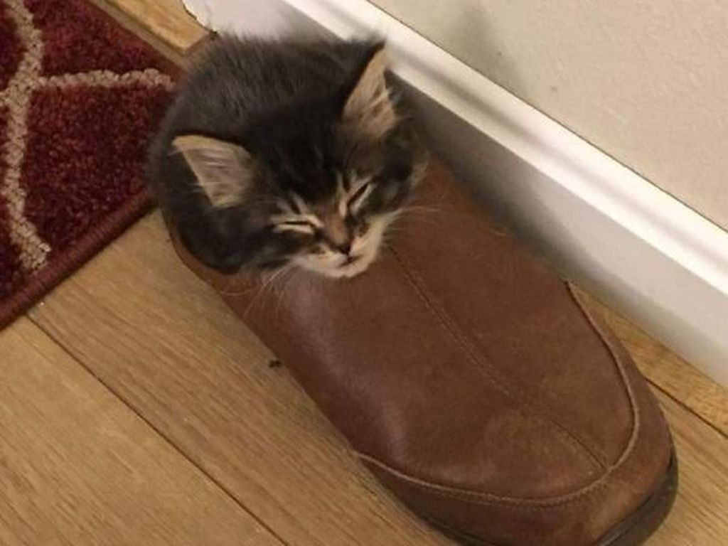 Pose Tidur Kucing-kucing Ini Bikin Auto Gemas Deh