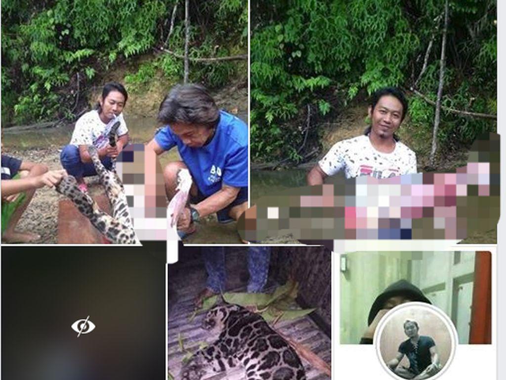TKI yang Pose dengan Macan Dahan Dikuliti Ngaku Tak Menguliti