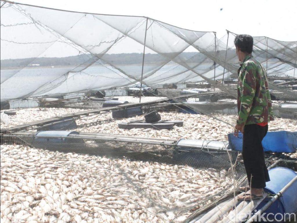 Suhu Air Waduk Kedungombo Berubah, Petani Ikan di Sragen Merugi
