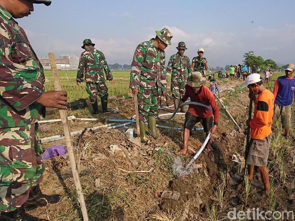 Petani dan TNI di Tulungagung Terjun ke Sawah Basmi Tikus