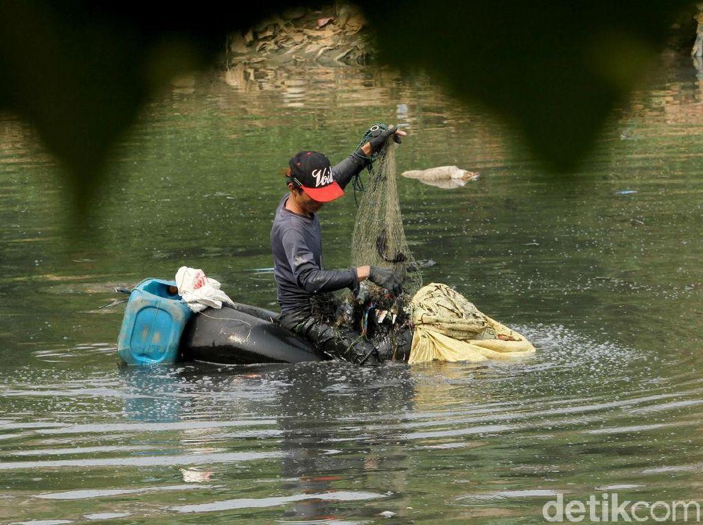 Sungai Ciliwung Surut, Ikan Mudah Diangkut