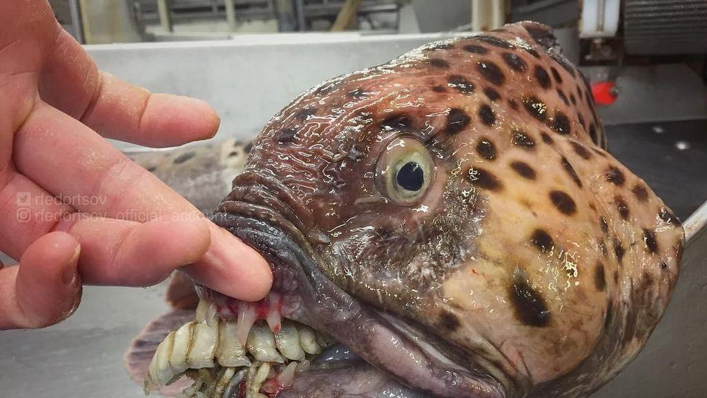 Bukan Tuna atau Tenggiri, Pria Ini Tangkap Ikan Seram Mirip Monster