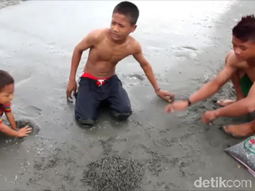 Heboh Ikan Seribu Serbu Pesisir Pantai Mamuju Tengah