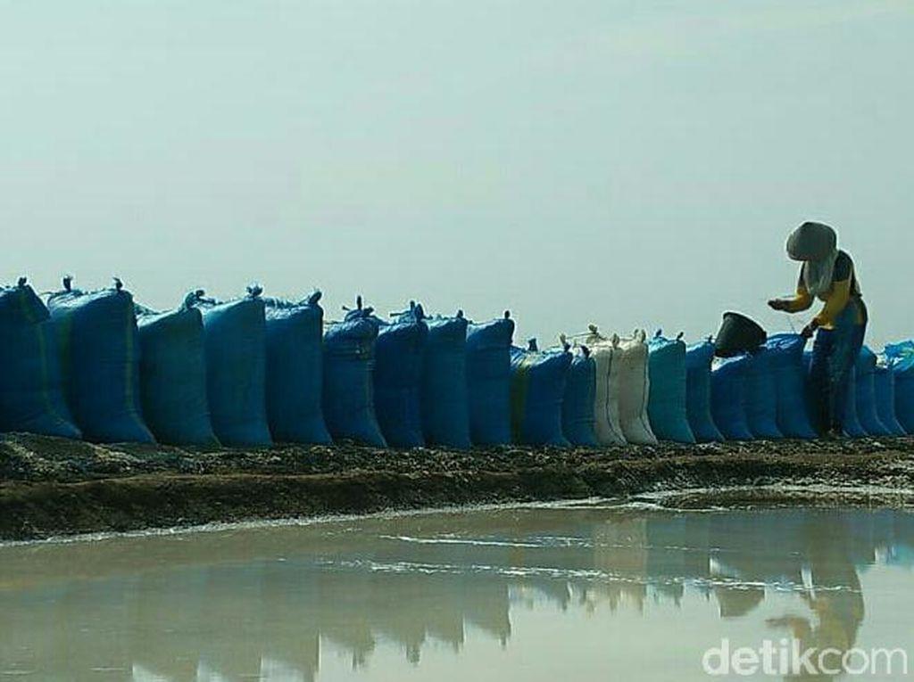 Harga Garam di Cirebon Anjlok Jadi Rp 300/Kilogram