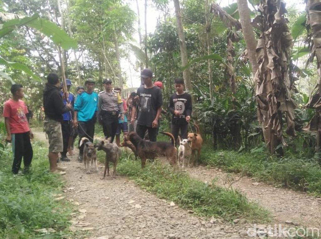 BKSDA Ungkap Penyebab Babi Hutan Serang dan Bunuh Warga di Banyumas