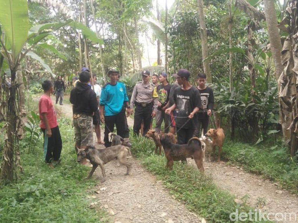 Habitat Terancam Diduga Penyebab Babi Hutan Ngamuk di Banyumas