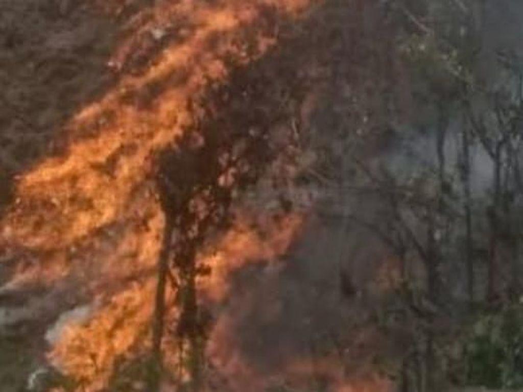 Kebakaran Lahan di Aceh Meluas, BPBA: Total 52 Hektare
