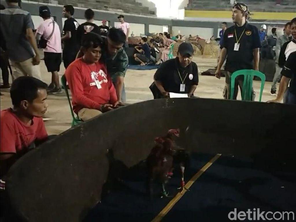 SOR Jadi Arena Sabung Ayam di Garut, Polisi Selidiki Dugaan Judi