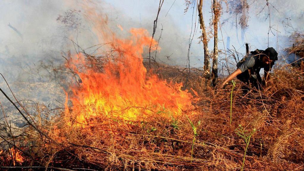 99 Hektar Hutan di Aceh Terbakar