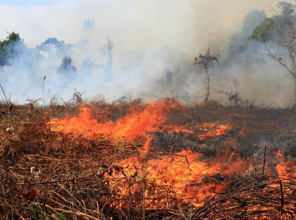 Kebakaran Lahan di 10 Wilayah di Aceh Capai 111 Hektare