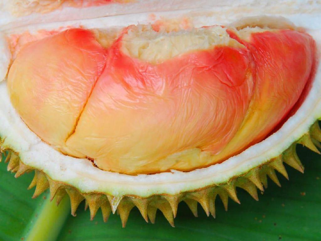 Geliat Durian Lokal Menembus Pasar Ekspor