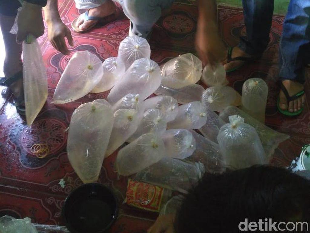 2 Pengepul Benih Lobster Senilai Rp 2,7 M Ditangkap di Banten