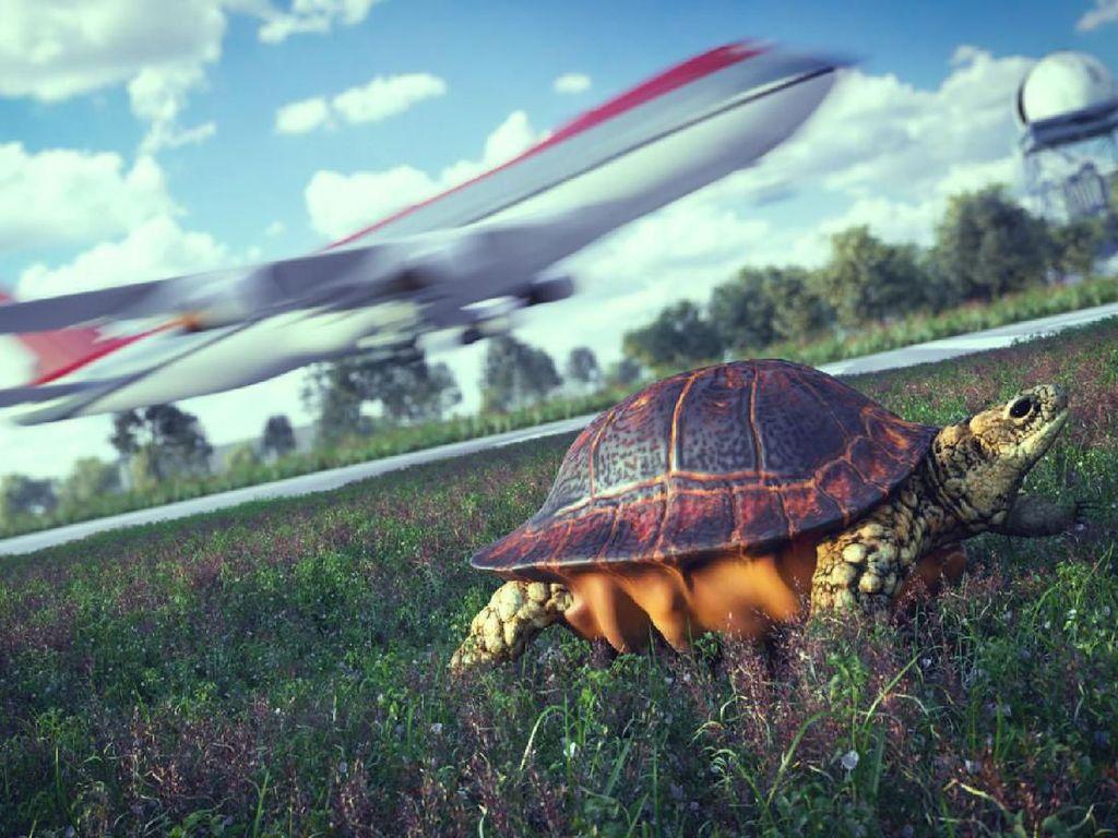 Pesawat Delay Gara-gara... Kura-kura Lewat