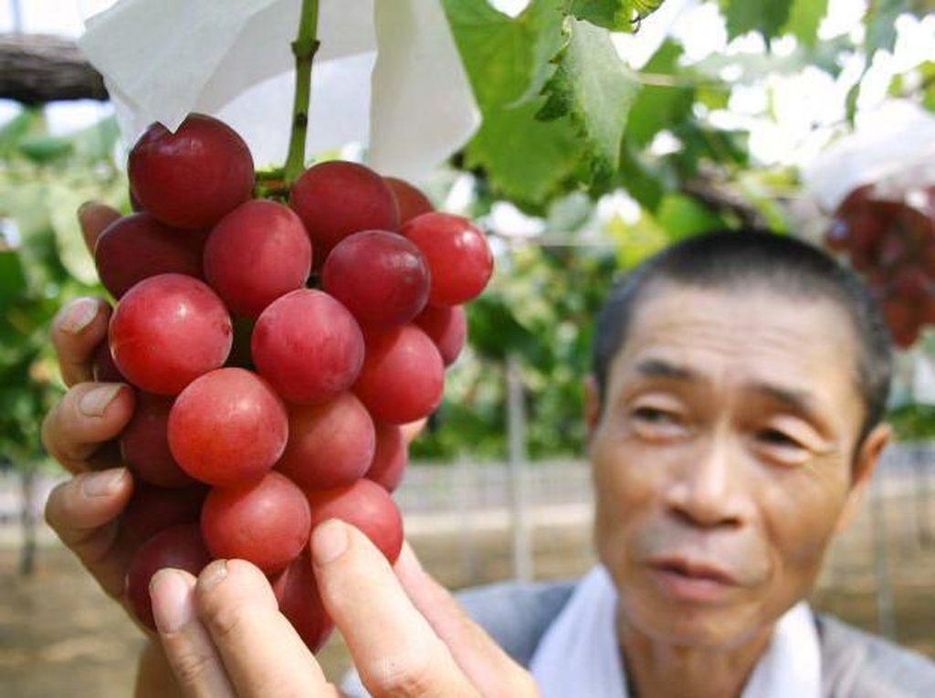 Wouw! Buah Anggur Merah Jepang Ini Terjual Seharga Rp 155 Juta