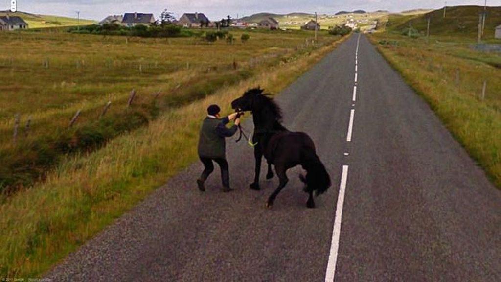 Aksi Hewan yang Tak Sengaja Tertangkap Kamera Google Street View