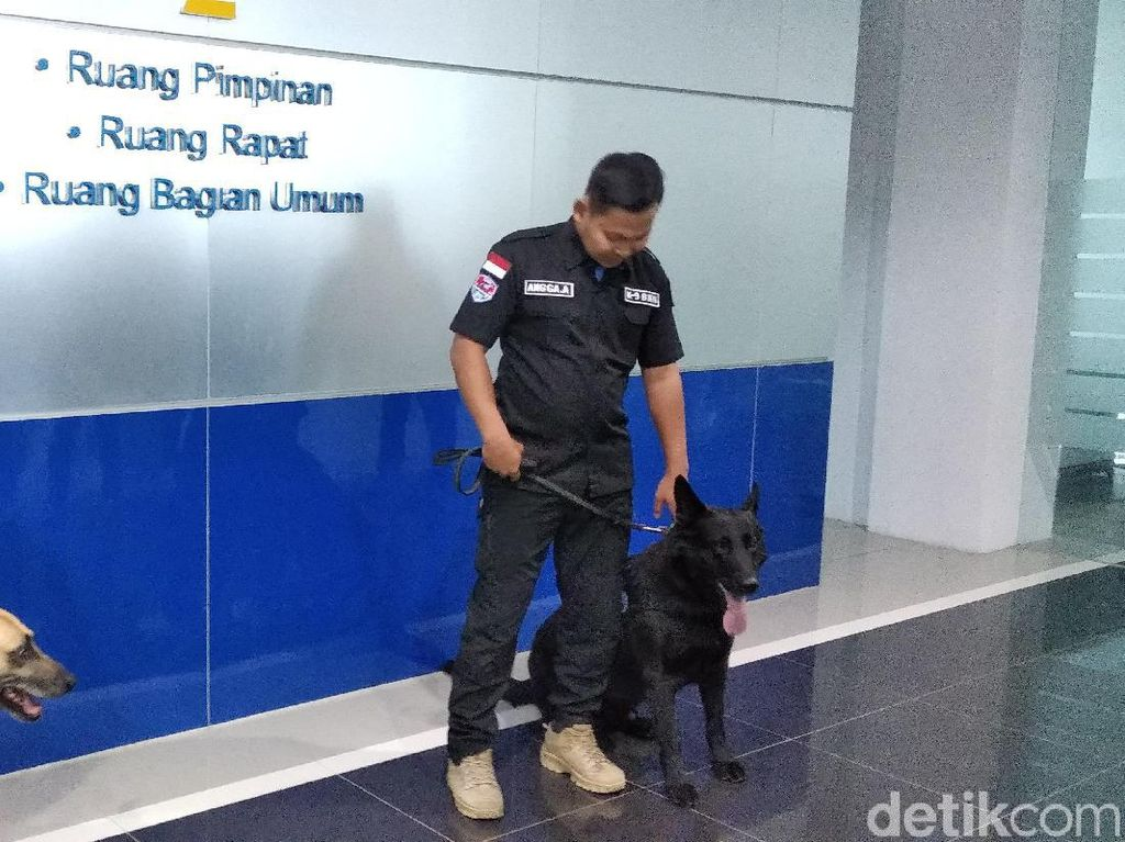 2 Anjing BNN Gagalkan Penyelundupan Ganja 169 Kg ke Jabar-Jakarta