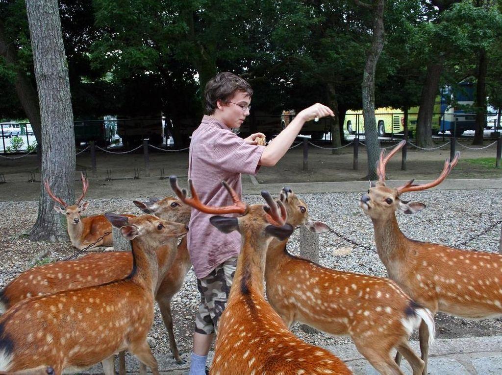 Bebas Lepas Rusa-Rusa di Nara Park Nikmati Musim Semi