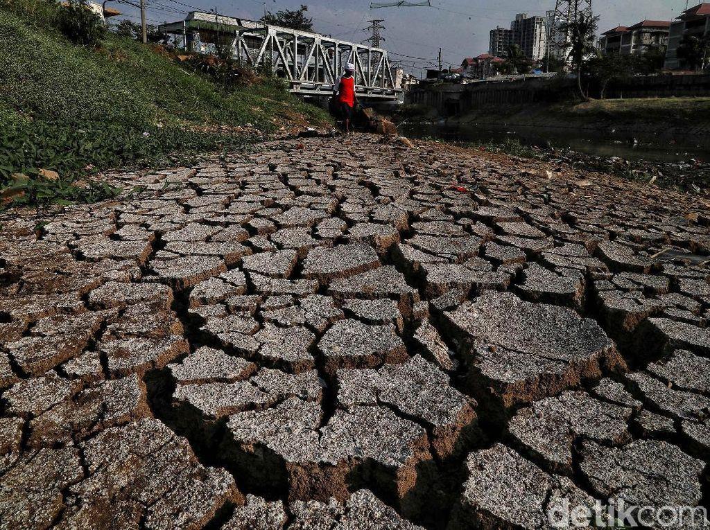 Potret Sungai Ciliwung Mulai Mengering Akibat Kemarau