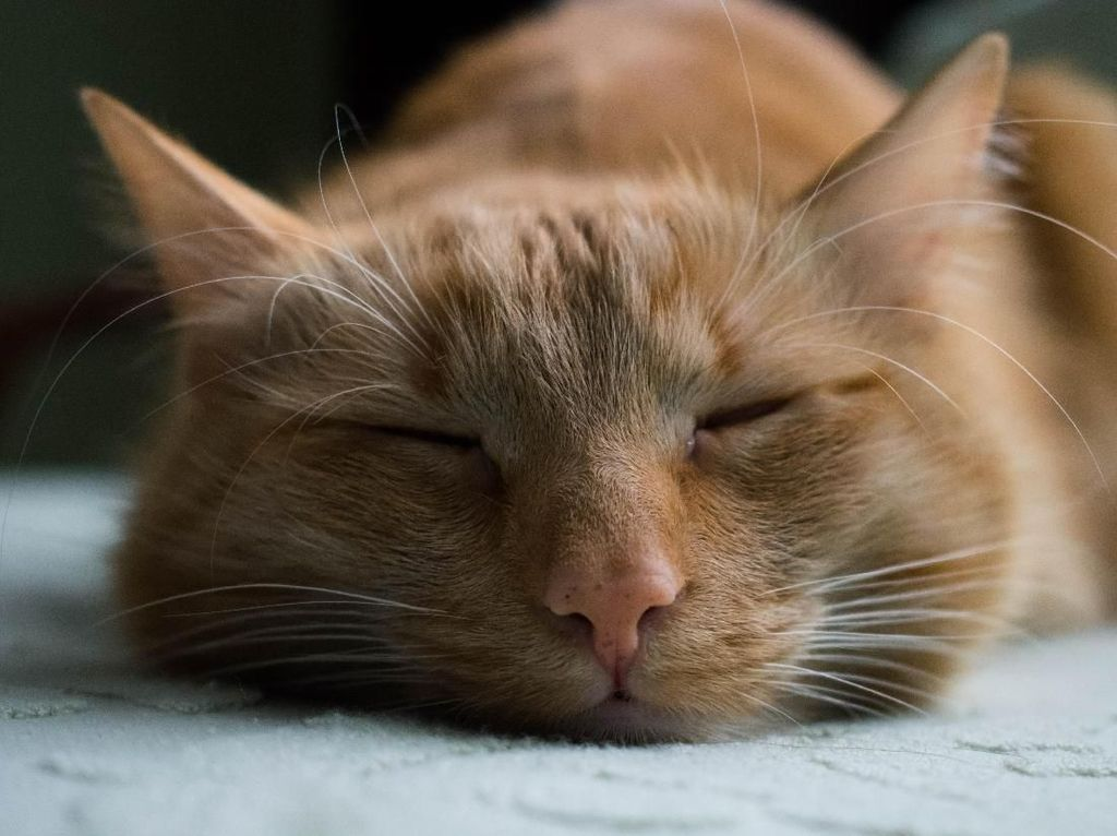 Polsek Kemayoran Telusuri Lokasi Pria Makan Kucing Hidup-hidup