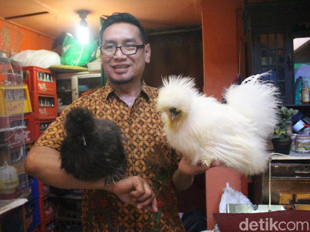 ASN di Sidoarjo Raup Untung Belasan Juta Ternak Ayam Hias