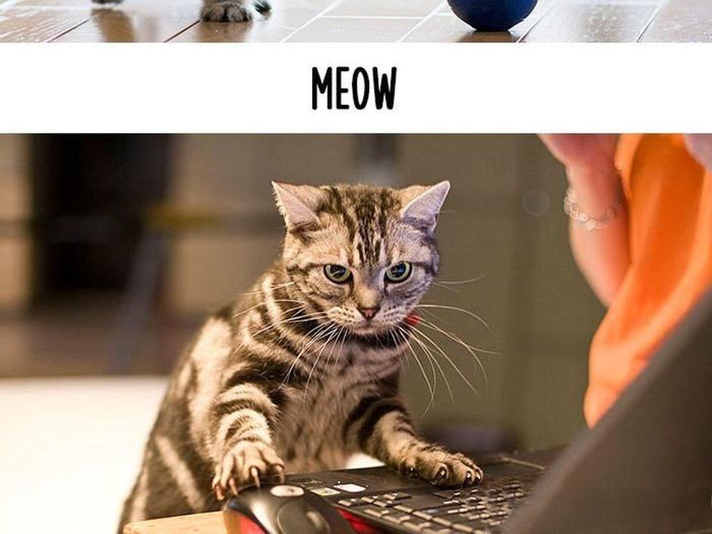 Dampak Kocak Teknologi: Kucing Jadul vs Kucing Zaman Now