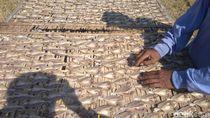 Ramai Soal Ikan Asin, Ini Proses Pembuatan Ikan Asin di Cirebon