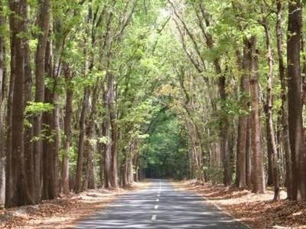 Alas Purwo: Hutan Tertua Jawa yang Magis nan Mistis
