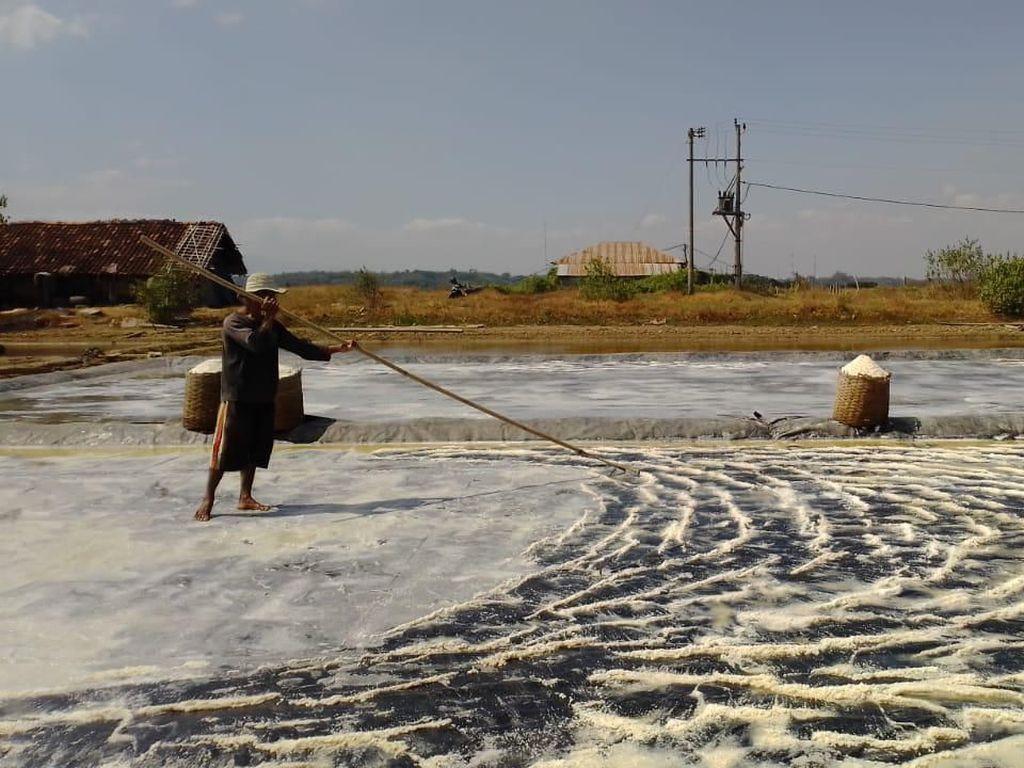 Harga Garam Anjlok, Petani Desak Pemerintah Turun Tangan
