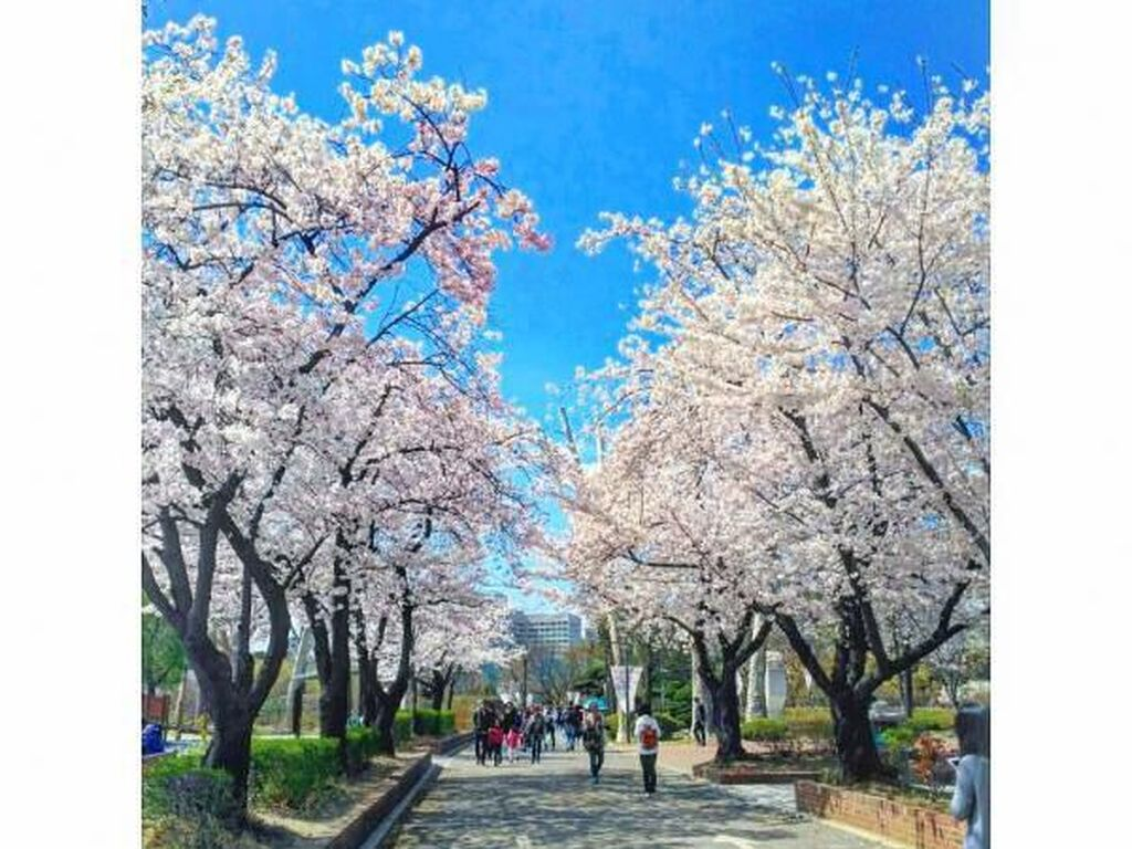 Pagi-pagi Menikmati Taman Indah di Seoul