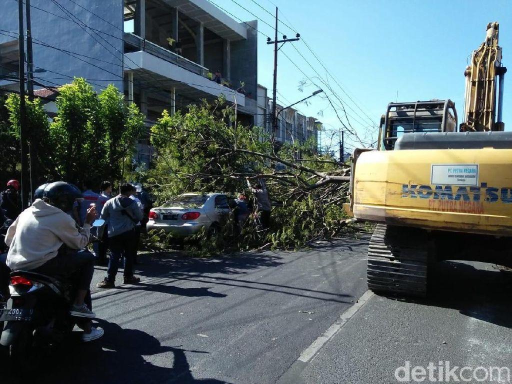 Pohon Tumbang Timpa 4 Pengendara di Jalan Prapen, 1 Orang Luka