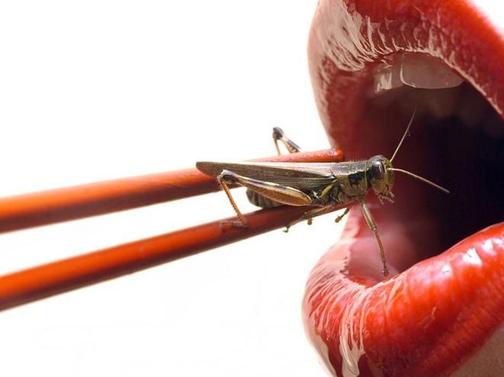 Ilmuwan Ini Sarankan Menggganti Protein Hewani dengan Serangga