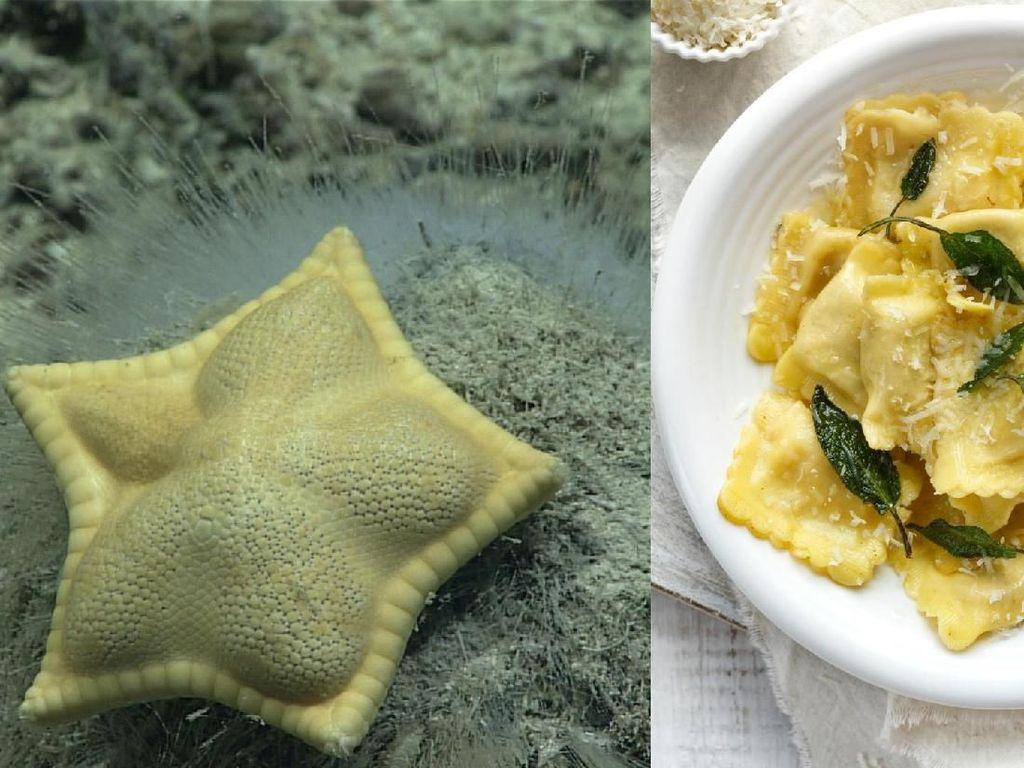 Bikin Gemas! Biota Laut Ini Punya Bentuk yang Mirip Makanan Italia
