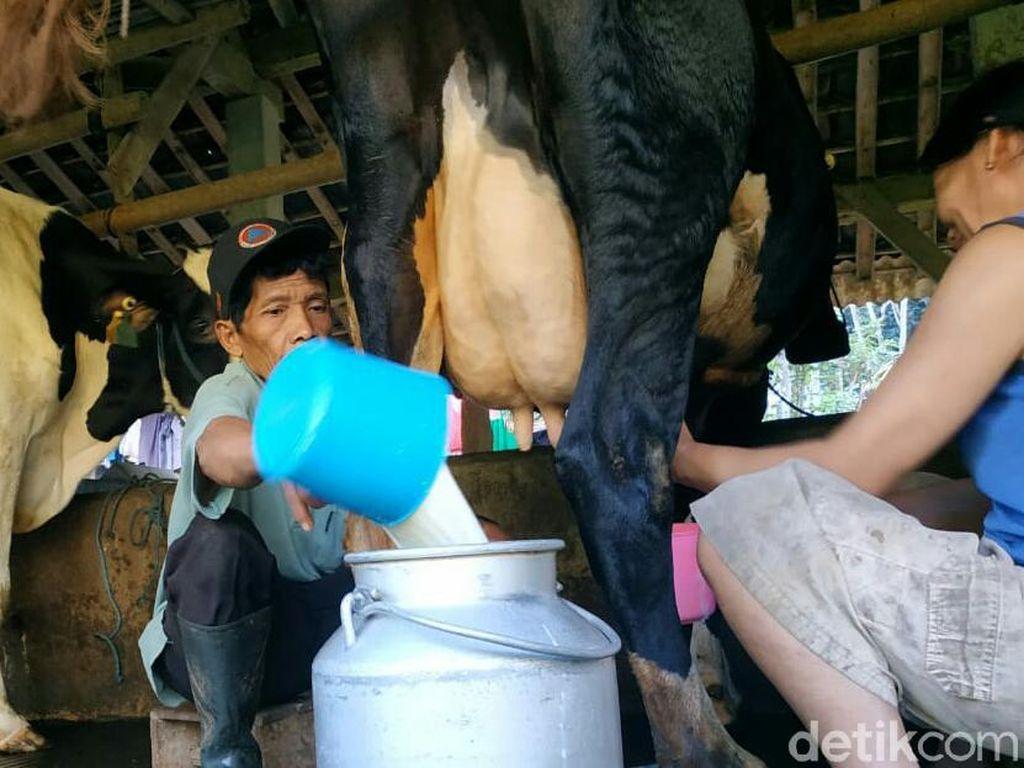 Banyak Minum Susu Bisa Meninggikan badan, Benar Nggak Sih?