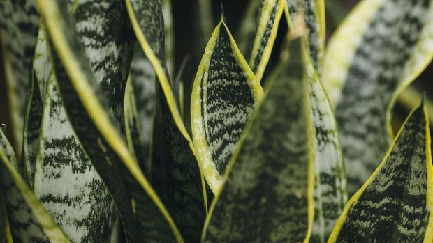 Crete, Greece, Plant, Wallpaper - Decor, Abstract, Aloe