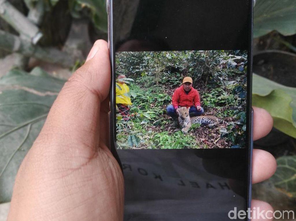 Teka-teki Kematian Seekor Macan Tutul di Pangalengan