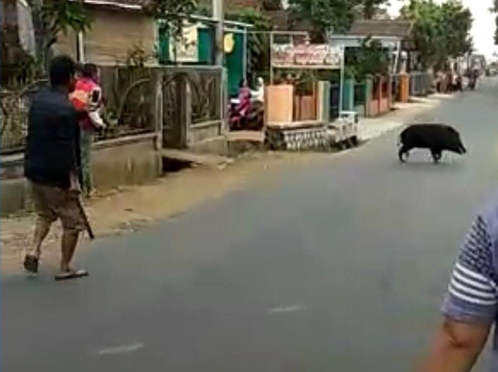 Banyak Hewan Liar Muncul di Pemukiman, BBKSDA: Makanan Berkurang