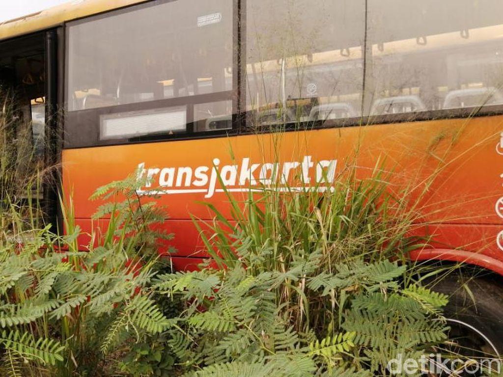 Potret Kuburan Bus Bertuliskan TransJ di Dramaga Bogor