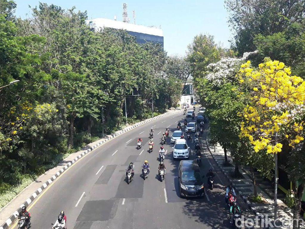 Indahnya Bunga Tabebuya di Berbagai Sudut Kota Surabaya